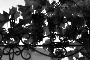 Виноградные кружева