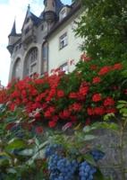 Яркие цвета лета