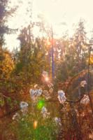 Солнечные светлячки