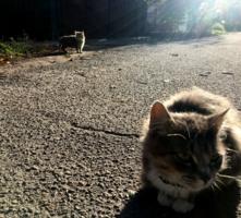 Лучи и коты