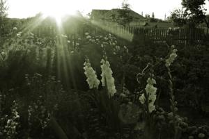 В лучах закатного солнца