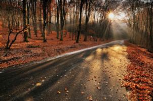 Осень - рыжая подружка