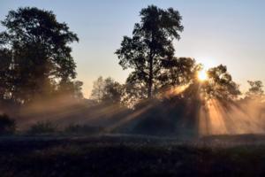 Утро на окраине деревни
