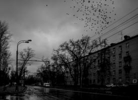 И только птицы в проводах
