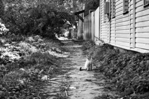 В живых остались только кошки...