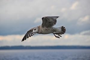 Реет чайка на просторе