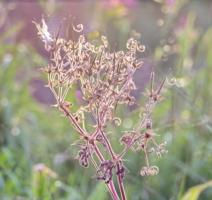 Причуды флоры