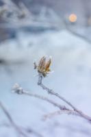 """Зимний """"цветок"""""""