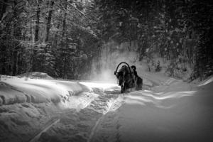 В студеную зимнюю пору