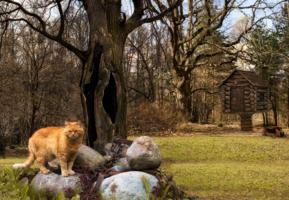 Сказочный кот