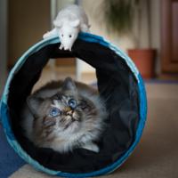 когда же вылетит мышка
