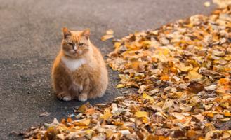 Тучная осень