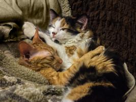 Спят усталые подружки
