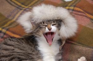 Зима-холода, мёрзнут ухи у кота