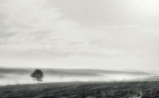 Уходящее в туман