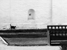 Черный кот на белой стене