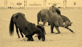 лошадиный реверанс