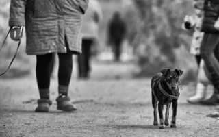 Слепой пес и его хозяйка...