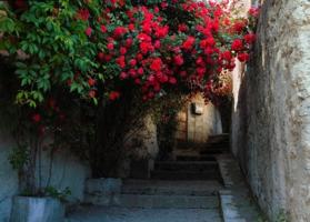 дорога, усыпанная лепестками роз