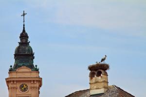 аист на крыше -