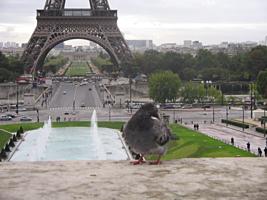 Парижанин