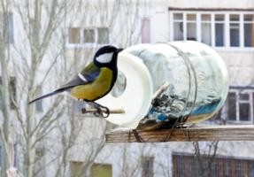 Покормите птиц.