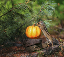 Скоро Halloween!