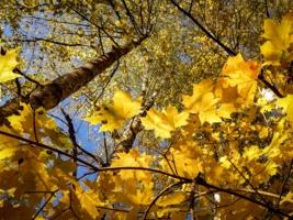 Взгляд сквозь осень.