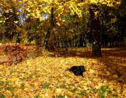 Дрема листопадная