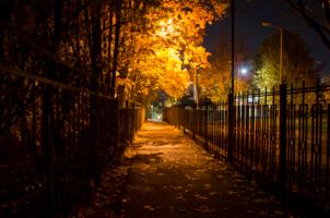 Золотая ночь