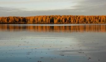 На реке листоход