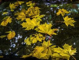 Осень на стекле