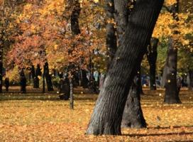 Листья желтые....