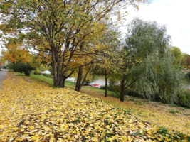 Осенний ковёр.