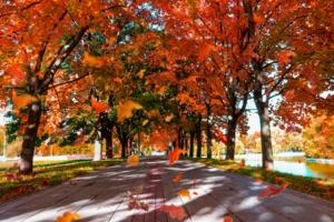 В нашем парке листопад