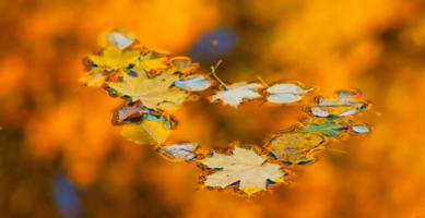 Хоровод опавших листьев