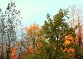 Пламенеют листья в зареве заката