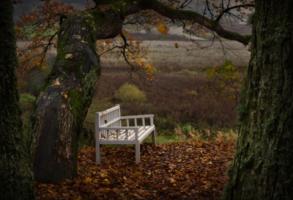 Скамейка, осень, тишина...