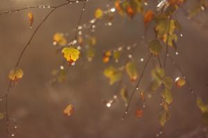 Листочек берёзовый