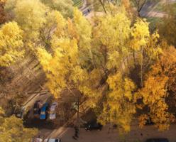 Золотая осень из моего окна