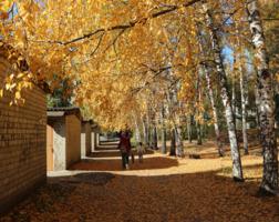 Шелестя облетевшей листвой.