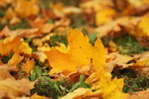 Листья желтые...