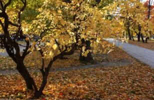 Осенью в сквере