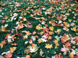 Разноцветье осени
