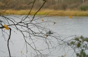 Осенние сети
