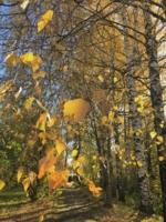 Золотой ковер осени