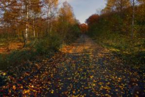 Шла дорогой осень...