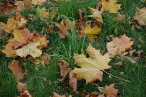 Листья травы)