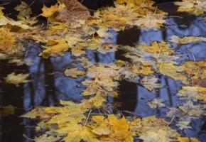 Осень в Архангельском