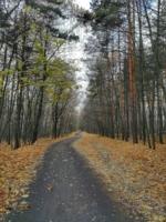 Сбросил лес к моим ногам листву.